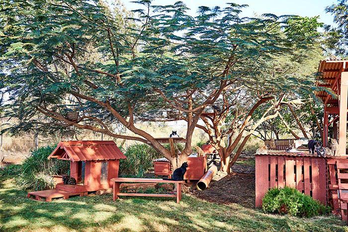 lanai-cat-sanctuary-hawaii-vinegret (3)