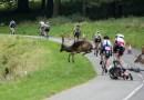 Олень сбил велосипедиста во время регулярных соревнований в Феникс-парке.