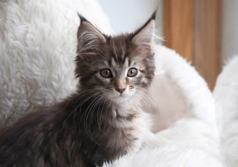 iris-and-cat-thula-vinegret-5