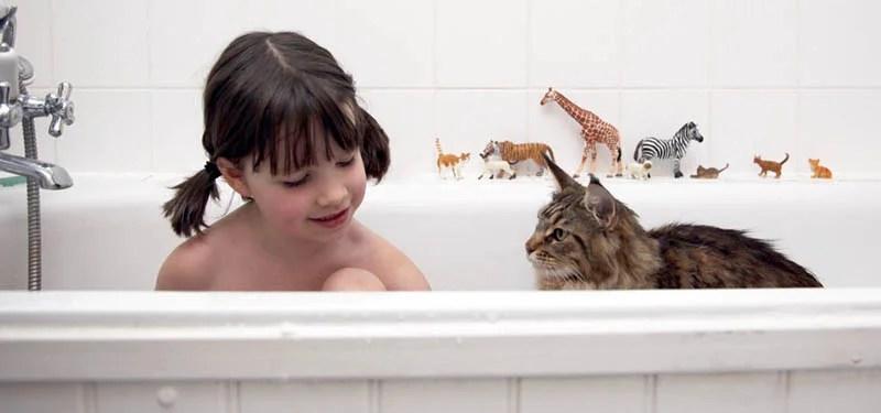 iris-and-cat-thula-vinegret-8