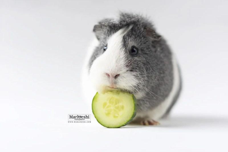 mieps-the-photogenic-piggy-vinegret-5