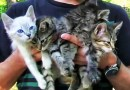 Поход в парк для пары закончился находкой и спасением маленьких котят. [Видео]