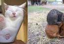 Эти 25 фотографий лишний раз доказывают, что кошки могут спать где угодно.