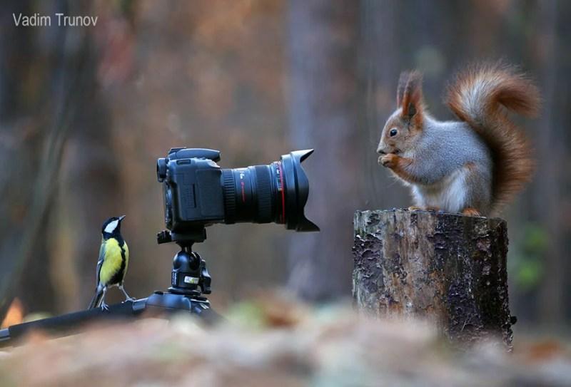 squirrel-photography-russia-vadim-trunov-vinegret-16