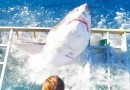 Чудесным образом фотографу в клетке удалось выжить после того, как его атаковала белая акула. [Видео]