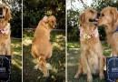 Собаки тоже не прочь делать «беременные фотосессии».