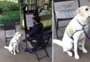 Снимок, где со служебной, смирно сидящей, собаки рисуют карикатуру, взорвал Интернет.