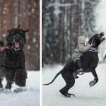 Дети и большие собаки в фотографиях Андрея Селиверстова.
