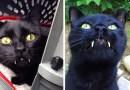 Женщина сильно удивилась, когда обнаружила, что спасенный ею кот оказался «вампиром».