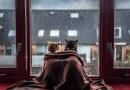 Фотограф из Голландии любит снимать своих кошек, когда те смотрят в окно во время дождя.
