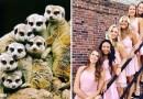 Вы когда-нибудь замечали, что девушки, позируя для фотографий, очень напоминают сурикатов?