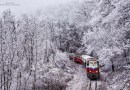 Фотограф из Венгрии провел целый день, чтобы заснять зимний лес в сказочном убранстве.