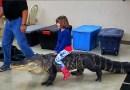 Тревожное видео, на котором маленькая девочка катается на 2,4-метровом аллигаторе.