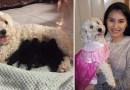 Интернет-общество недоумевает, как это у двух белых пуделей могли родиться черные щенята?