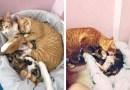Кот-отец поддержал свою кошку во время родов.
