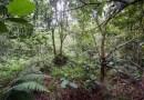 12 солдат неплохо спрятались в джунглях — сможете ли вы их найти?