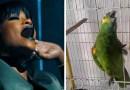 Этот попугай поет партию Рианны из композиции «The Monster», и люди, считают, что у него это получается лучше. [Видео]