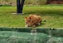 Шокирующее видео, в котором львица попыталась допрыгнуть до дразнящих ее туристов.
