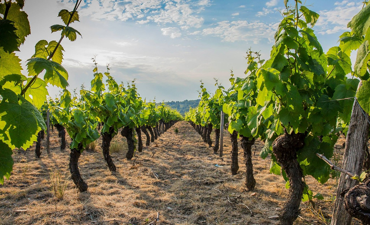 new technology applications for agriculture: going beyond awareness - the  vineyard of the future