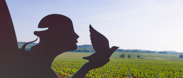 Vignobles de Vina Laguna