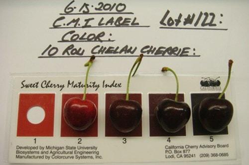Cherry Mỹ vô cùng đa dạng