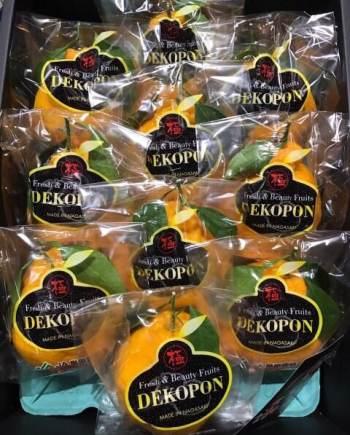 Quýt chum nhật - Vinfruits