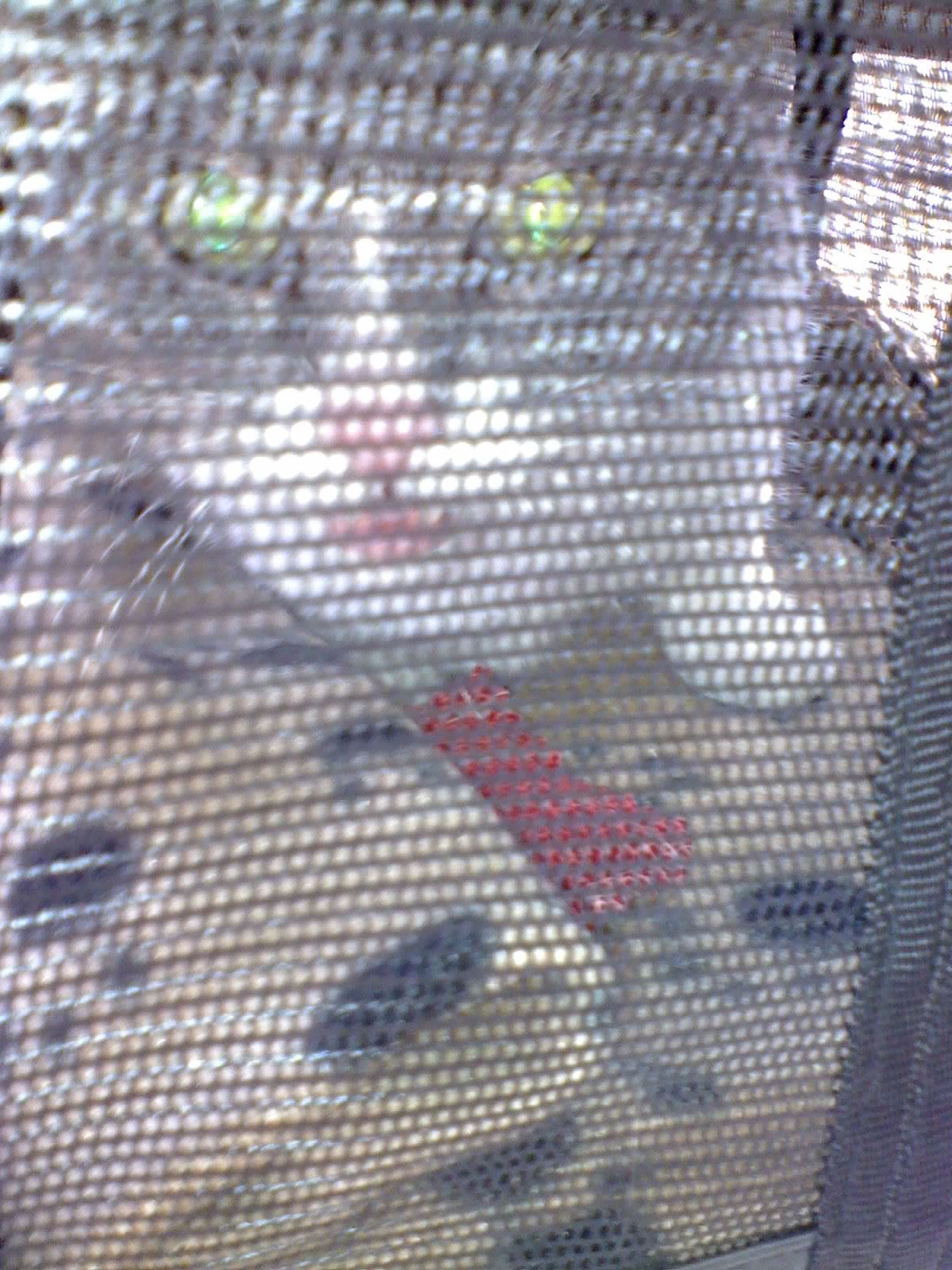 Jasmine in her carrier.