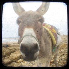 photography donkey morocco viewfinder