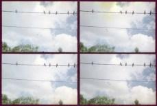 17.vogels2 kopie