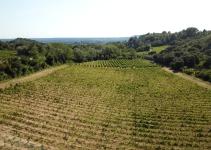 Vinhos Côtes-du-Rhône – França