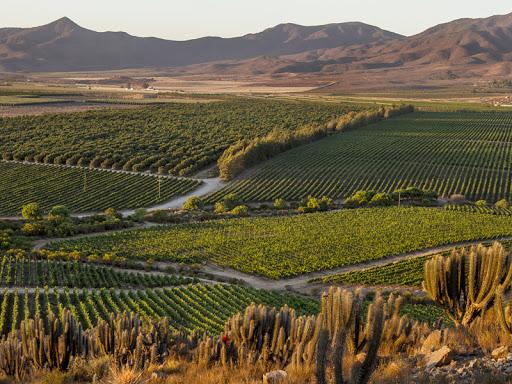 Chile e suas regiões vitivinícolas