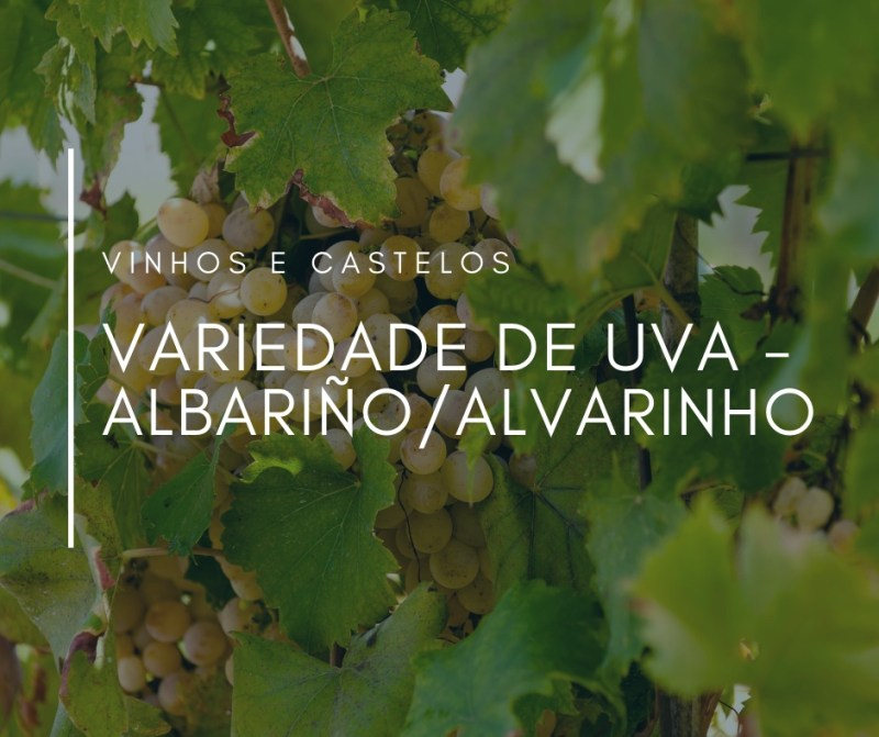 Variedade de uva: Albariño (Alvarinho)
