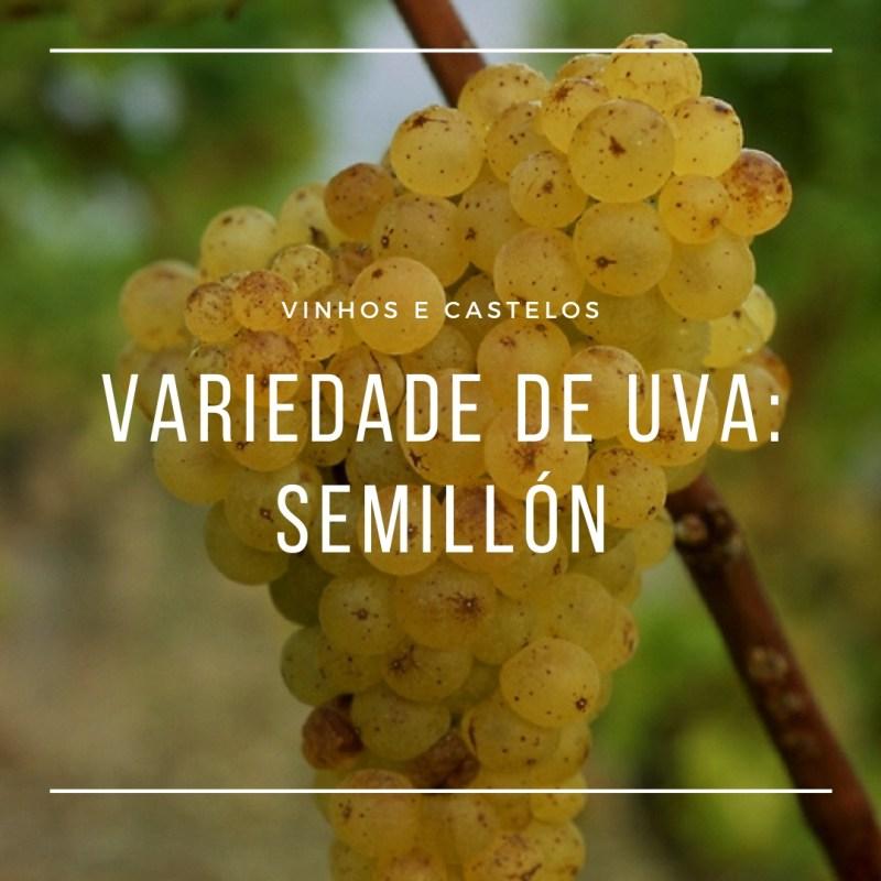 Variedade de uva Semillón