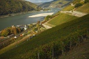 Vista de Ausmannshaus - Cortesía de Deutsches Weininstitut GmbH