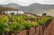 Monte Xanic: Poniendo en alto la calidad del vino mexicano