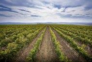 Moldavia y su variada gama de vinos, incluyendo un Albariño.