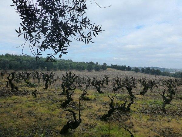 Chile: el redescubrimiento del Valle de  Itata