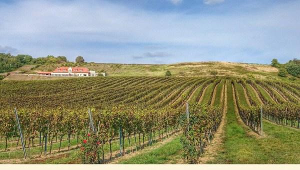 Los vinos Eslovacos cuentan con cada vez más seguidores
