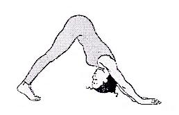 Adhomukha shvanasana