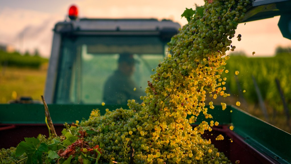1st PlaceErrazuriz Wine Photographer of the Year - Produce© Oscar Oliveras,Spain