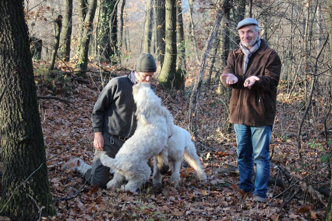Меир Чернецкий - Винотурс - truffle hunting