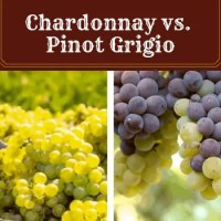 Chardonnay vs Pinot Grigio - Which Will You Enjoy More?