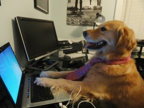 Dog typing in a keyboard