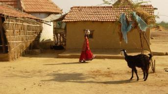 Smmer in village-2