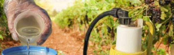 Коллоидная сера для винограда – инструкция как разводить ...