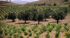 Las condiciones climaticas para el cultivo 1