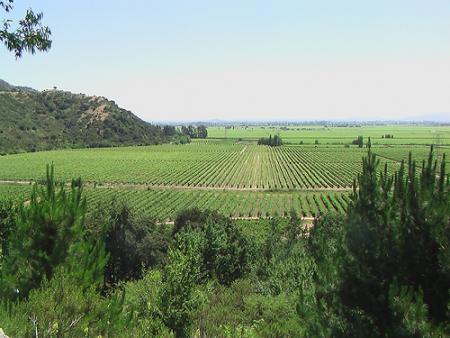 Campos de viñedos
