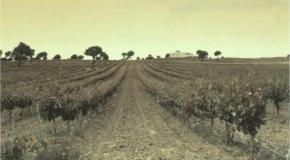 El marco o distancia de plantación 2