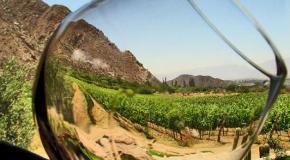 ¿España se queda sin producción de Rioja?