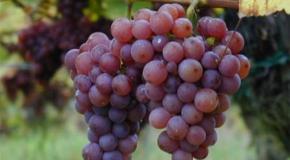 De la mano del vino, España repunta